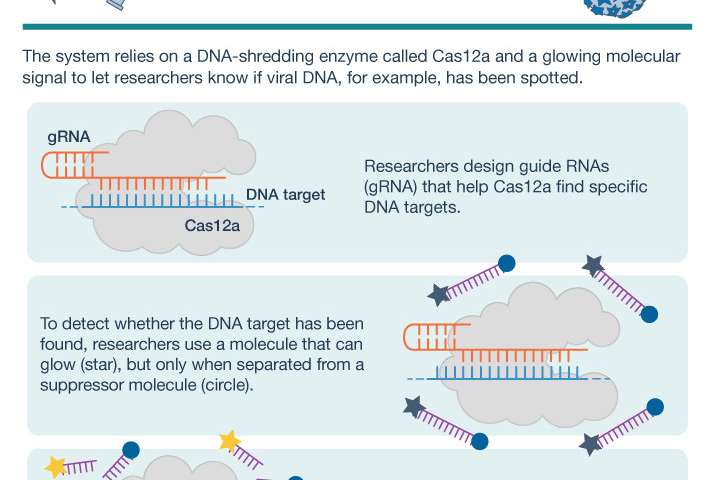 CRISPR-based technology can detect viral DNA