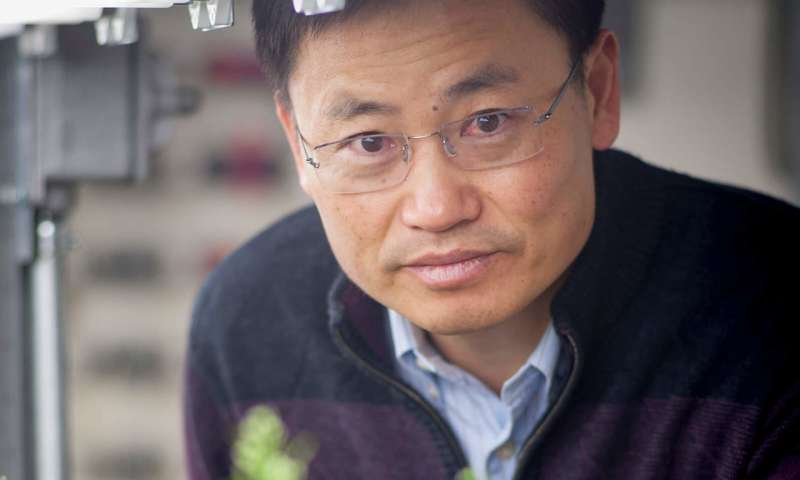 CRISPR-edited rice plants produce major boost in grain yield