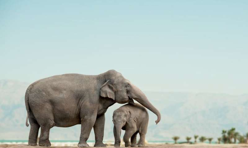 Crying elephants and giggling rats –animals have feelings, too