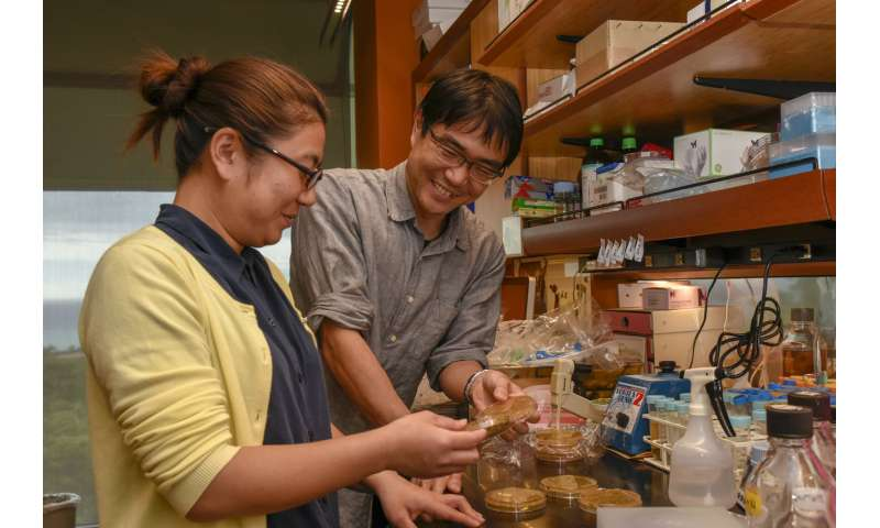 Cure for fission yeast genes could have bigger things ahead