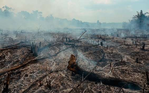 Current deforestation pace will intensify global warming, study alerts