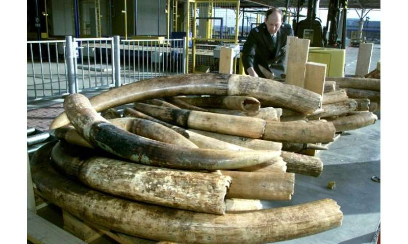 Currently Dutch law permits the sale of raw ivory with an EU certificate, provided it entered the country between 1947 and 1990.