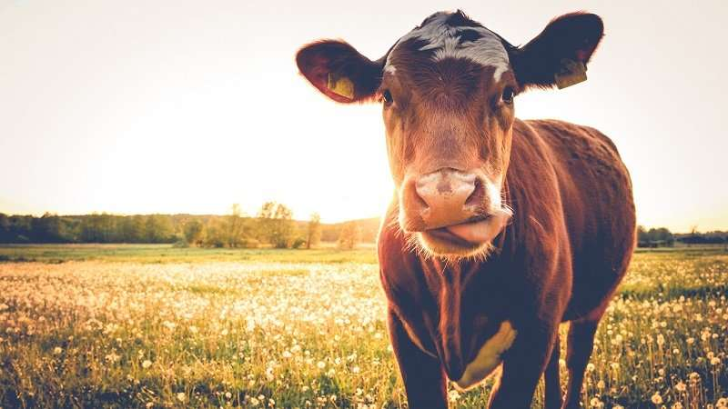 Dairy farms are using too much water