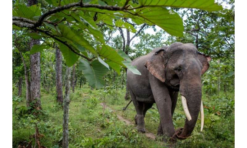 "Dak Lak province was dubbed the ""elephant kingdom"" for the large herds that once roamed its forests"
