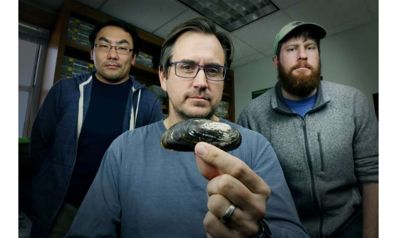 Dallas researchers study Texas' first federally endangered mussel species