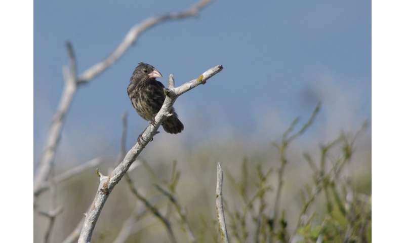 Darwin's finches -- where did they actually come from?