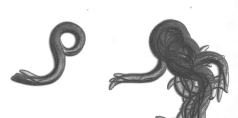 DEET scrambles worms' sense of smell