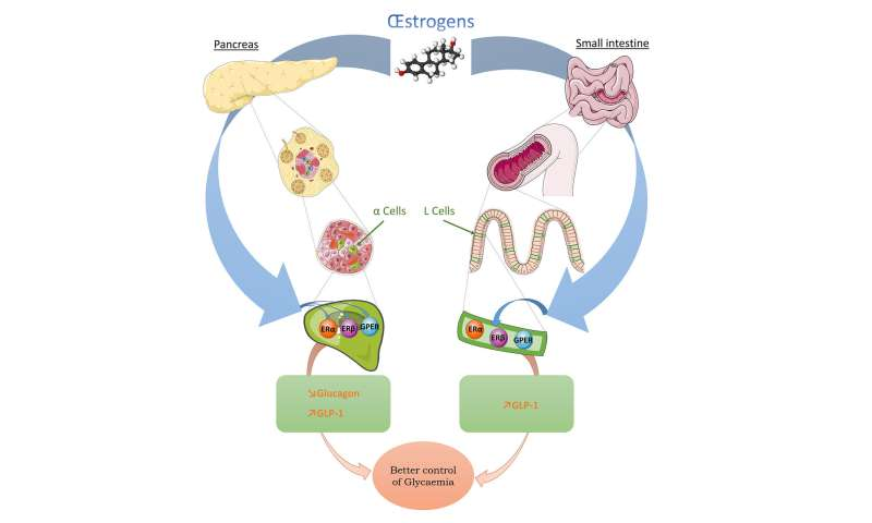 Diabetes: A new insight of the protective role of estrogens