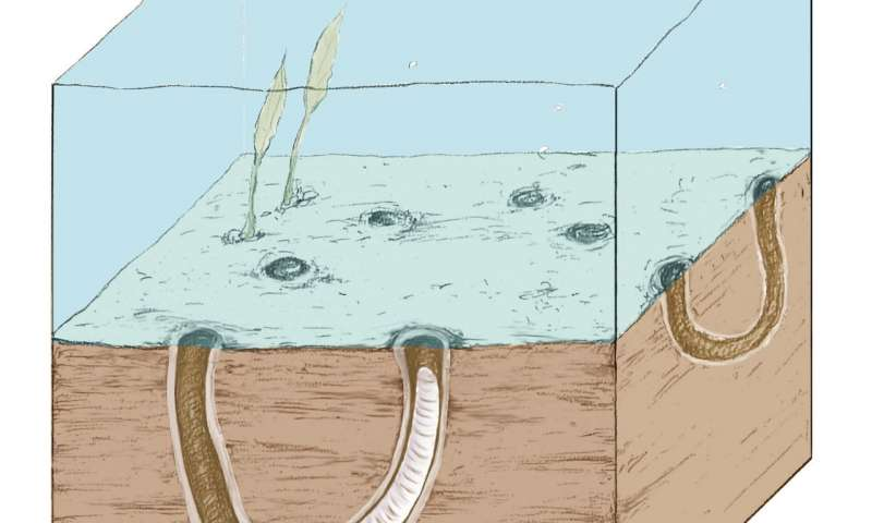 Digging up the precambrian—fossil burrows show early origins of animal behavior