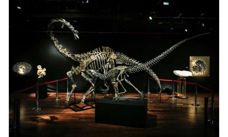 Dinosaur skeletons, including the two being auctioned this week, are increasingly being sought as interior design objects, in pa