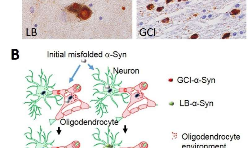 Diverse Parkinson's-related disorders may stem from different strains of same protein
