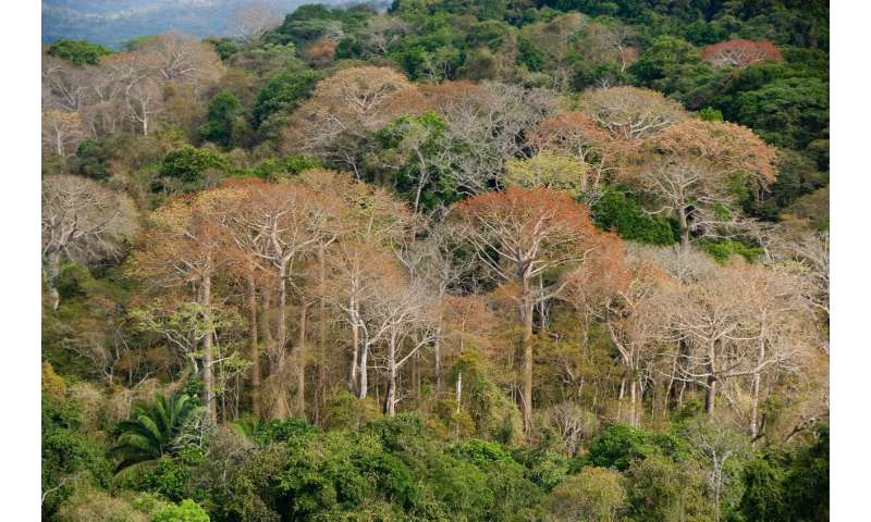 Diverse tropical forests grow fast despite widespread phosphorus limitation