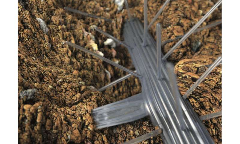 Divining Roots: revealing how plants branch out to access water