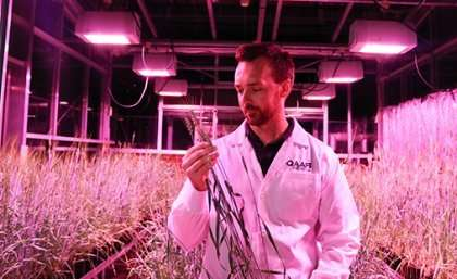 DIY crop speed breeding system to boost drought research