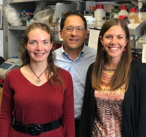 'DNA origami' triggers tissue generation in early development