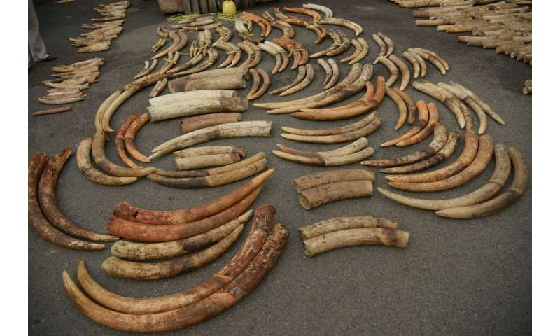 792976bd4b3e DNA tests of illegal ivory link multiple ivory shipments to same dealers