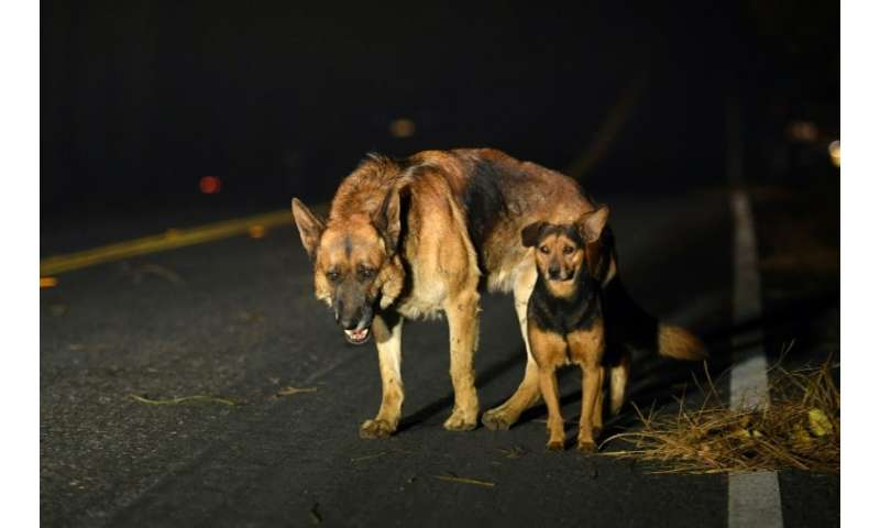 Dogs roam burned out neighborhoods as the Camp fire tears through Paradise