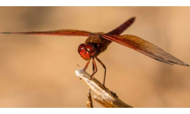 Dragonfly wing technology to defend against post-surgery infection