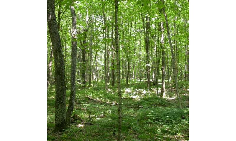 Drought-induced changes in forest composition amplify effects of climate change