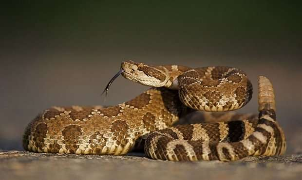 Drought predictive of decrease in snakebites