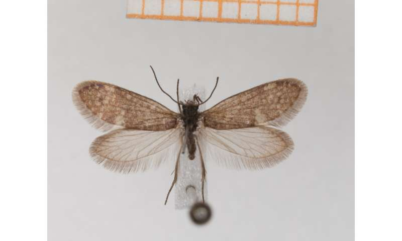 Earliest fossil evidence of butterflies and moths