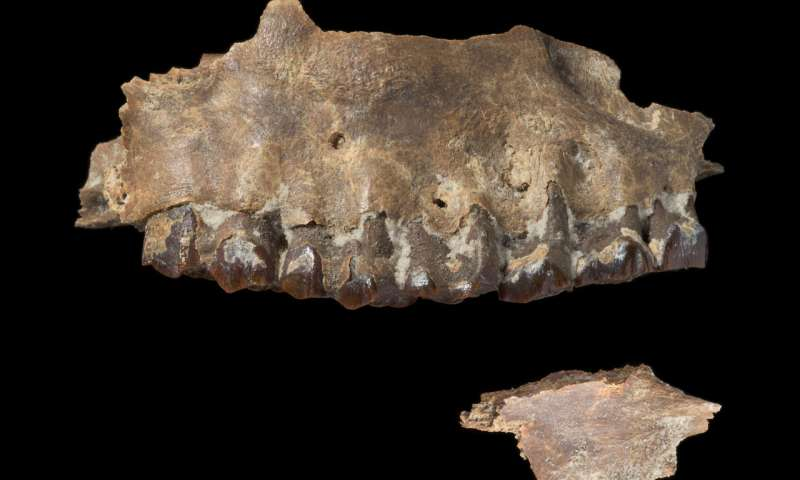 Earliest hominin migrations into the Arabian Peninsula required no novel adaptations