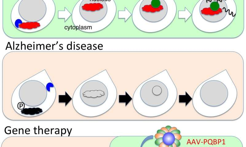 Early changes to synapse gene regulation may cause Alzheimer's disease