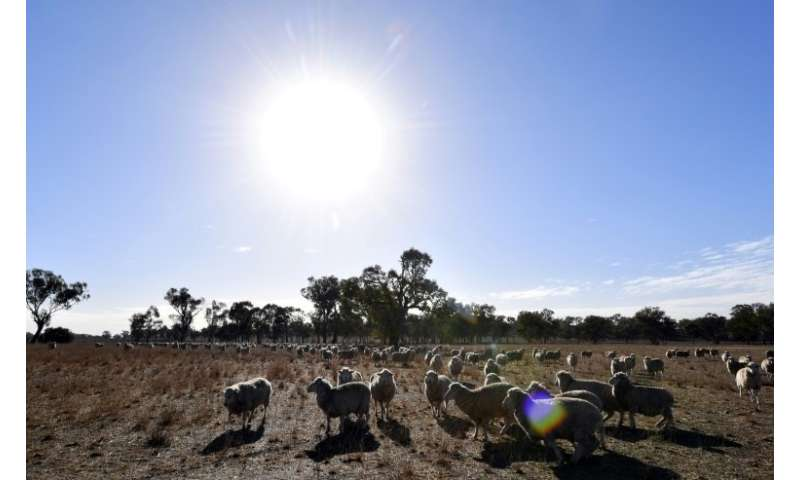 Eastern Australia has been hit by a crippling drought that has forced graziers to hand-feed their stock, sell them or even shoot
