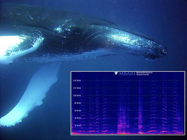 Eavesdropping on the deep—New live streaming audio from a deep-sea hydrophone Eavesdroppin