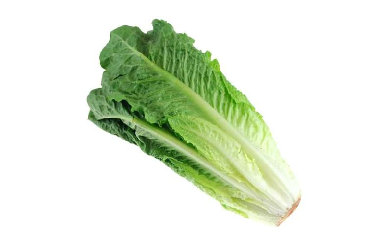 E. coli-tainted romaine lettuce threatens the frail, sick most
