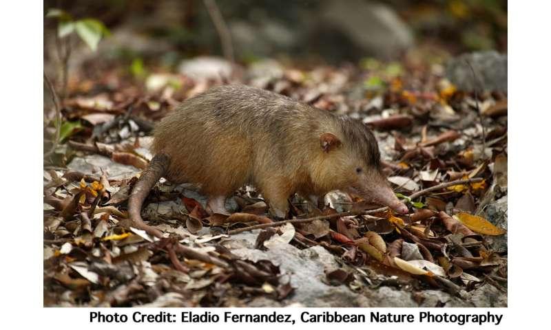 Elusive venomous mammal joins the genome club Elusivevenom