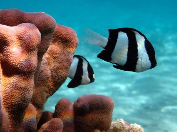 Escape responses of coral reef fish obey simple behavioral rules c7e6f473978