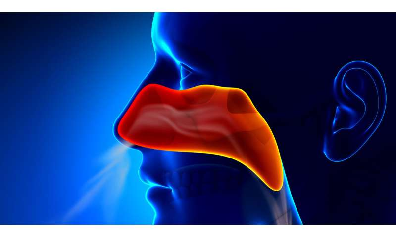 Exosomes 'swarm' to protect against bacteria inhaled through the nose