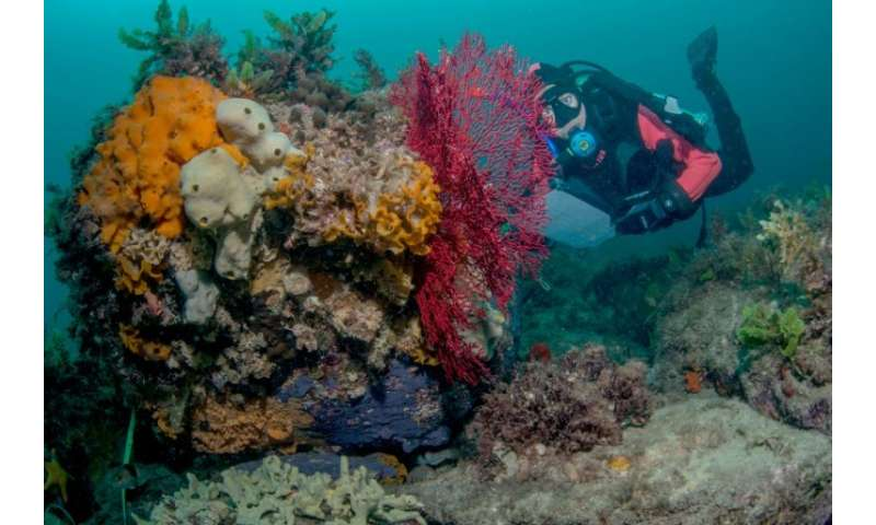 Experts have warned of an alarming decline in Australian fish populations