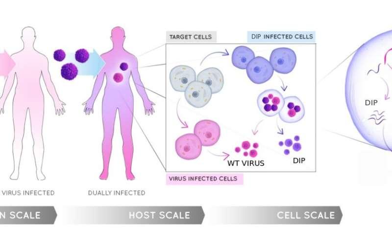Exploring new research to combat disease-causing viruses