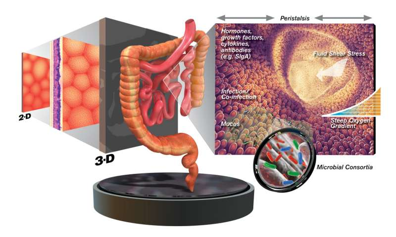 Farewell flat biology -- Tackling infectious disease using 3-D tissue engineering