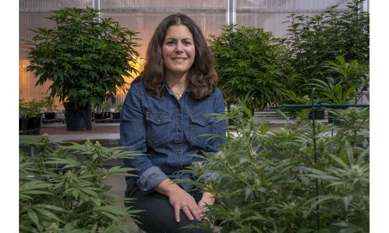 Favoring Female Flowers in Hemp Horticulture