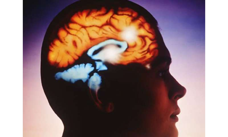 Feeling young may be reflected in brain structure