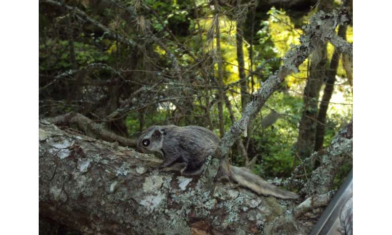 Finnish forest management guidelines fail to protect the flying squirrel