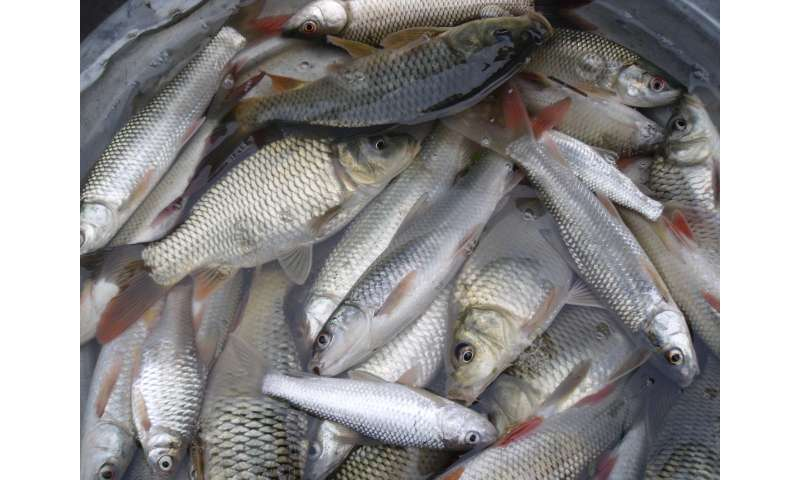 Fish farms are helping to fight hunger