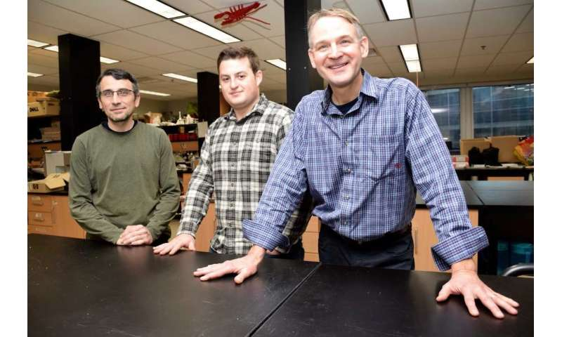 Fish's brain size influenced by habitat, new University of Guelph study reveals