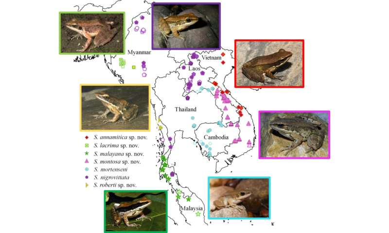 Five new species of frogs identified in museum collections