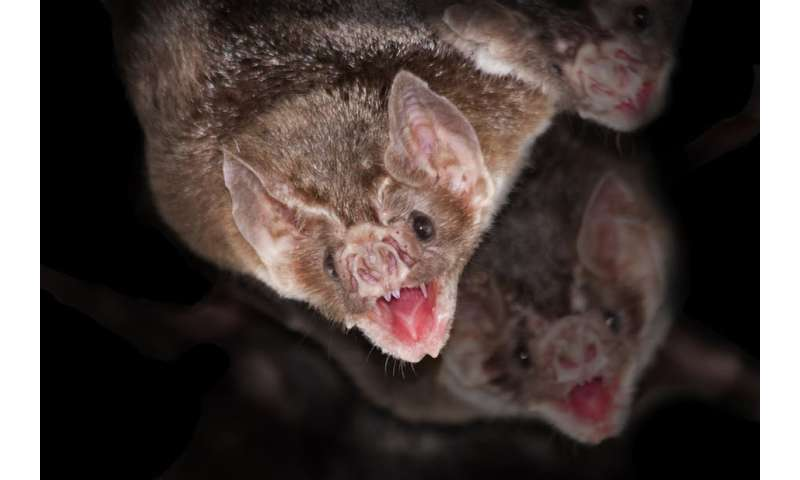 Five vampire traits that exist in the natural world