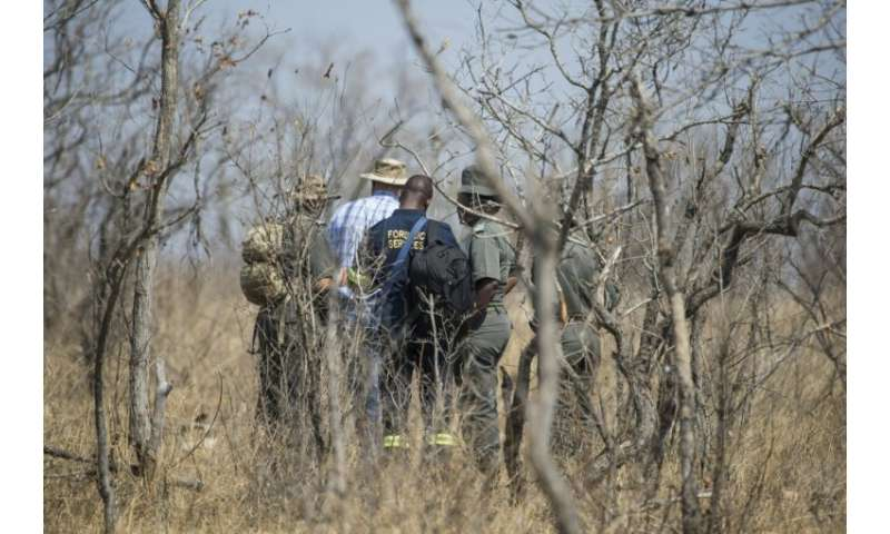 Forensic investigators are seen near the scene where a poached rhino was found in the Kruger National Park on August 21