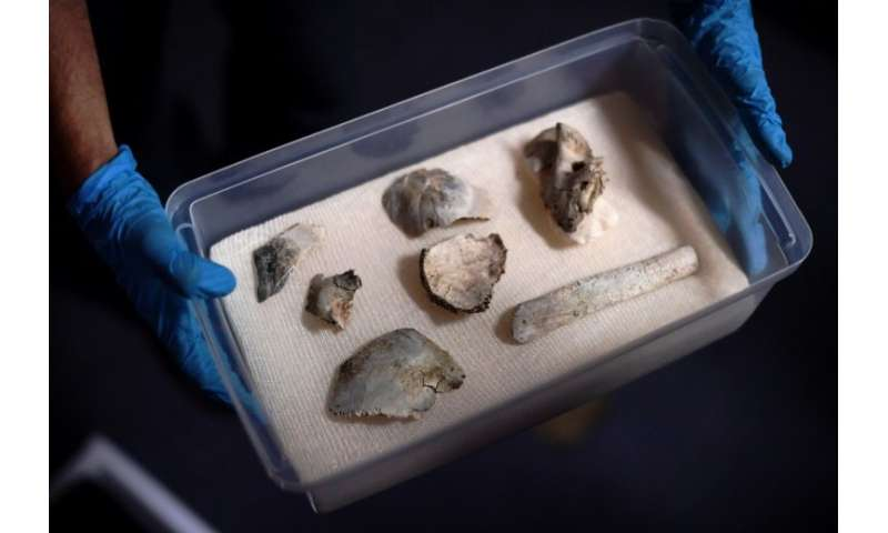 "Fragments of the oldest human fossil found within today's Brazilian borders, known as ""Luzia"" were recovered among the"