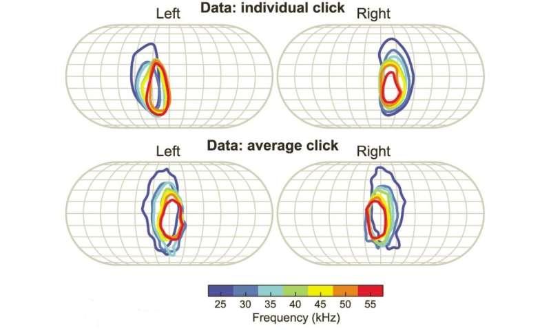 Fruit bat's echolocation may work like sophisticated surveillance sonar