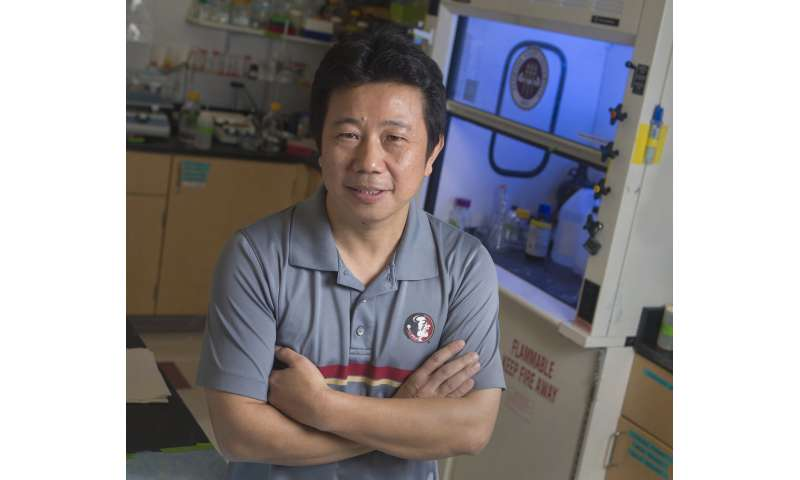 FSU research: Zika suppresses virus-fighting cells