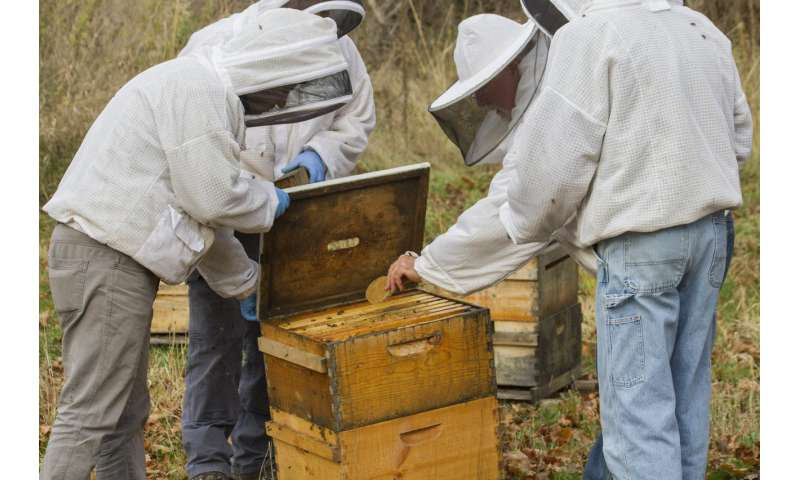 Fungus provides powerful medicine in fighting honey bee viruses