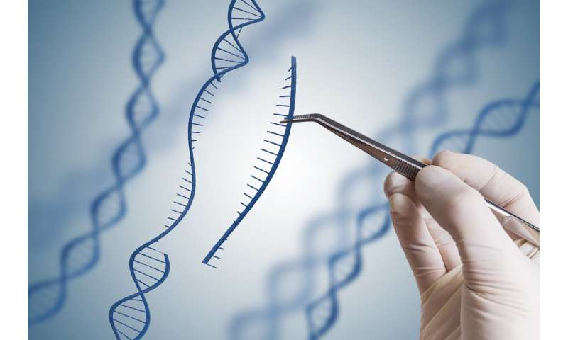 Gene drives accelerate evolution – but we need brakes