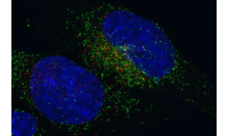 Gene fusion shifts cell activity into high gear, causing some cancer